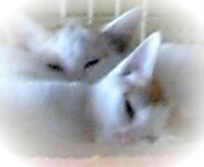 DVC00152  子猫2匹うとうと