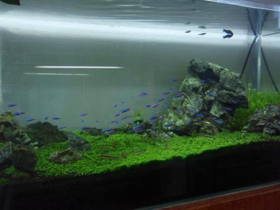 水草水槽2