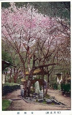 昔の有馬名所有明桜