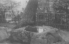 太閤さん遺愛の亀の手洗い鉢