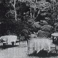 杉本ホテルのお庭