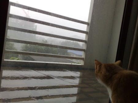 rain01.jpg