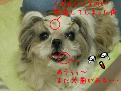 005_convert_20081109131024-1.jpg