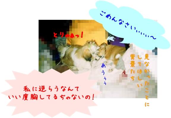 011_9A-1_convert_20081112155416-1.jpg