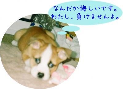013_11A-1_convert_20081103111154.jpg