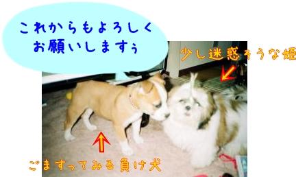 017_15A_convert_20081112160352-1.jpg