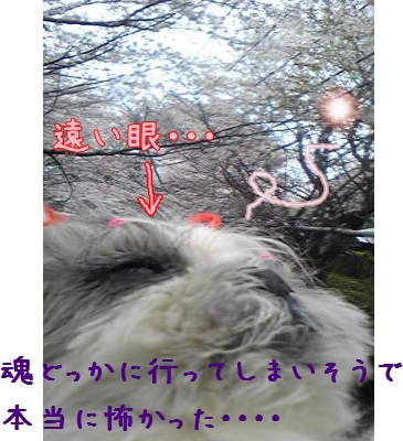080327_083934_convert_20081109093507-1.jpg