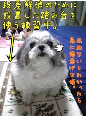 080420_convert_20081109112633-1.jpg