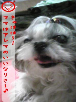 081024_194808_convert_20081107112501.jpg