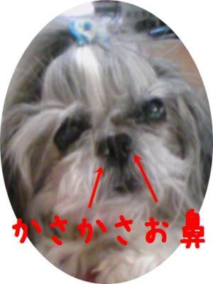 081030_01_convert_20081105164224.jpg