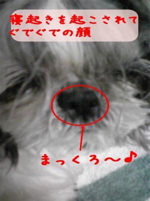 081105_01_convert_20081105164309.jpg
