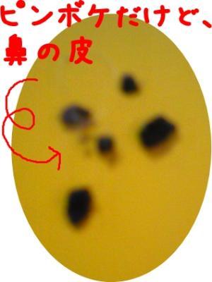 081105_02_convert_20081105164342.jpg