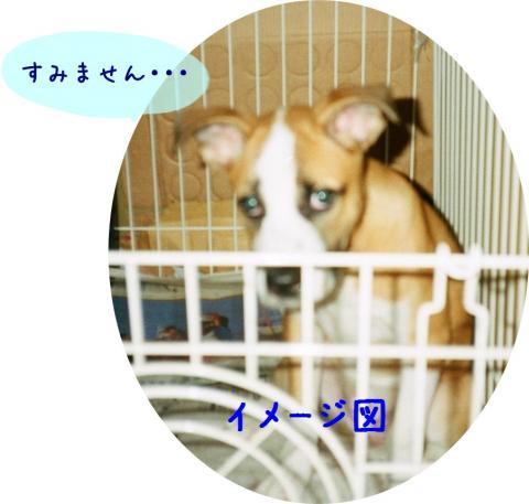 081_2A-01_convert_20081102002757.jpg