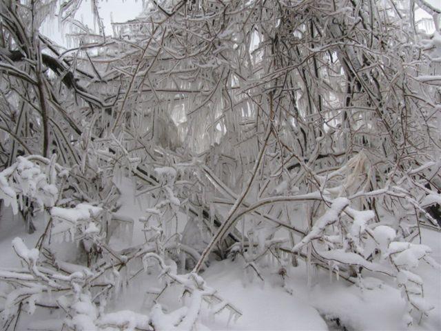 11.1.30-5しぶき氷