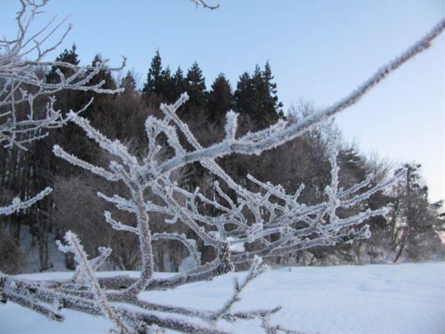 11.2.21-3霧氷