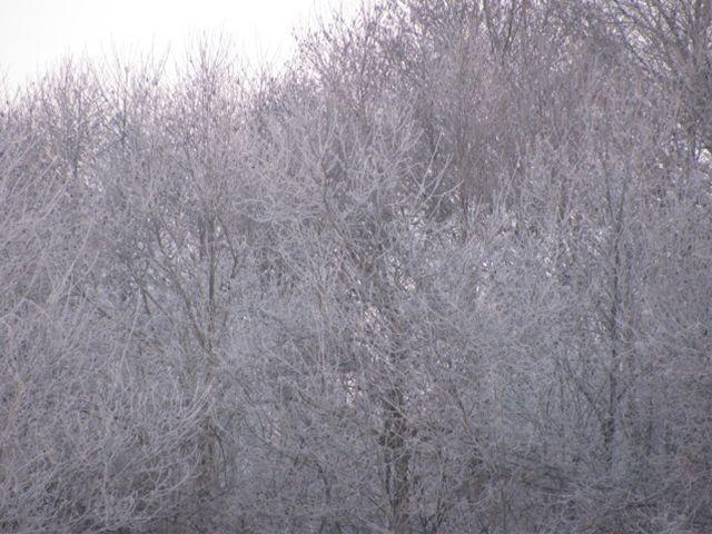 11.2.21-1霧氷