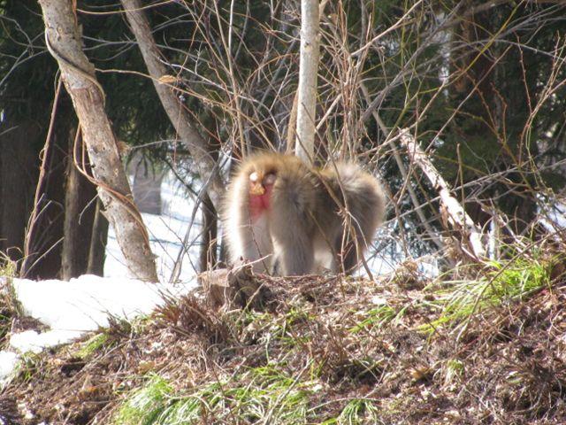 11.2.26裏山へ猿