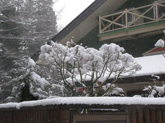 11.3.26-23要らない雪