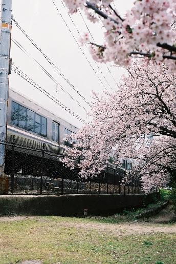 電車と桜♪