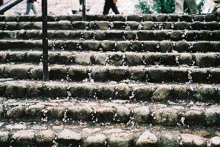 花びらと階段
