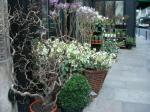 植木屋のような花屋