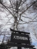 万座母樹林1