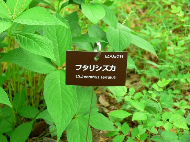 樹名札mini3