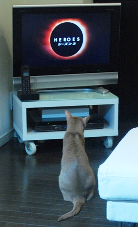 テレビを見る…?
