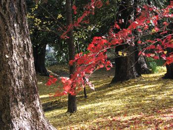 sansakuro-s.jpg