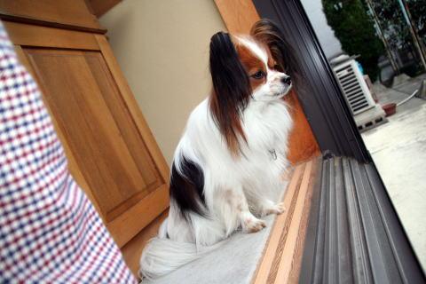 外を眺めるアラン