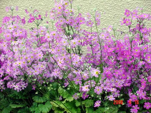 200416・今朝の花1