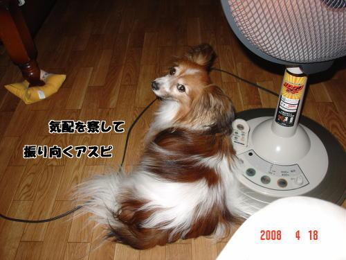 200418・寝姿4