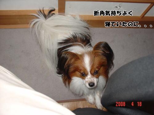 200418・寝姿7