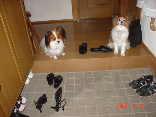 200419・今朝の散歩1