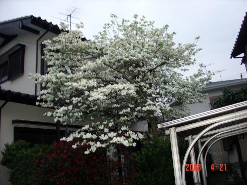 200421・今朝の花木2
