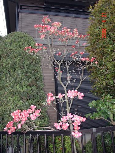 200421・今朝の花木4