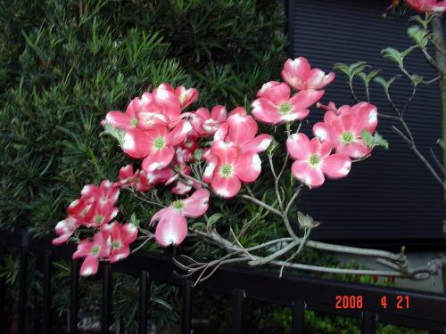 200421・今朝の花木5