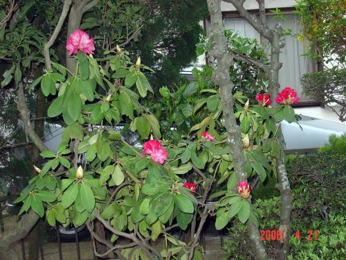 200421・今朝の花木8