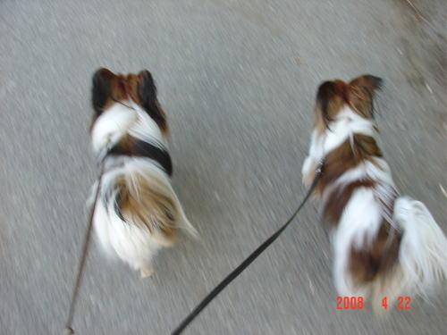 200422・散歩6