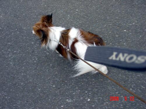 200522・アスピの散歩2