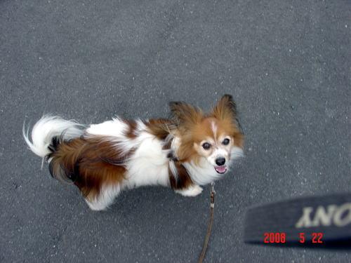 200522・アスピの散歩3