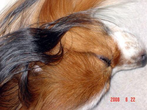 200623・寝るアラン3