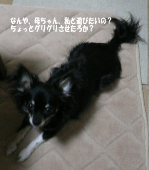 megumi5_20080818174756.jpg