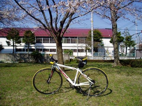 FCR2桜と