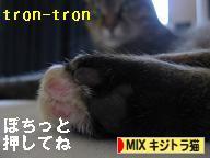 MIXキジトラ猫ブログランキングへ!