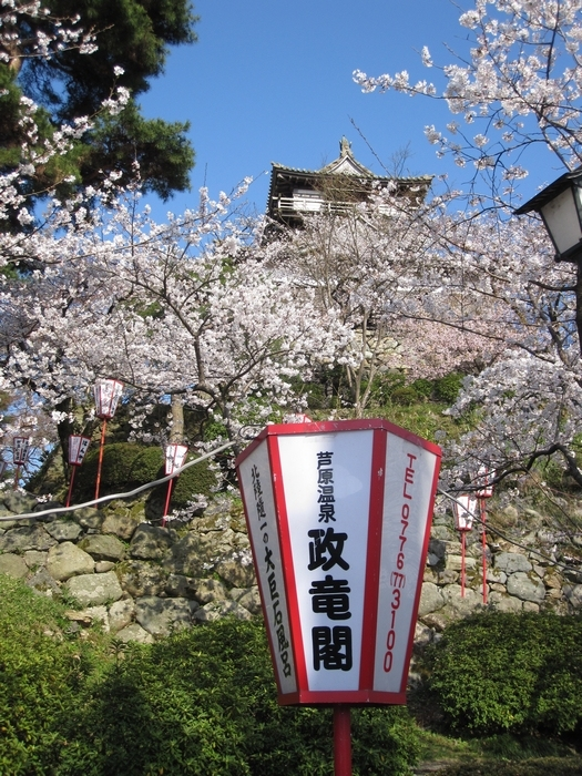 丸岡城桜まつりぼんぼり