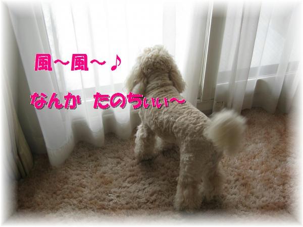 161_convert_20120404170856.jpg