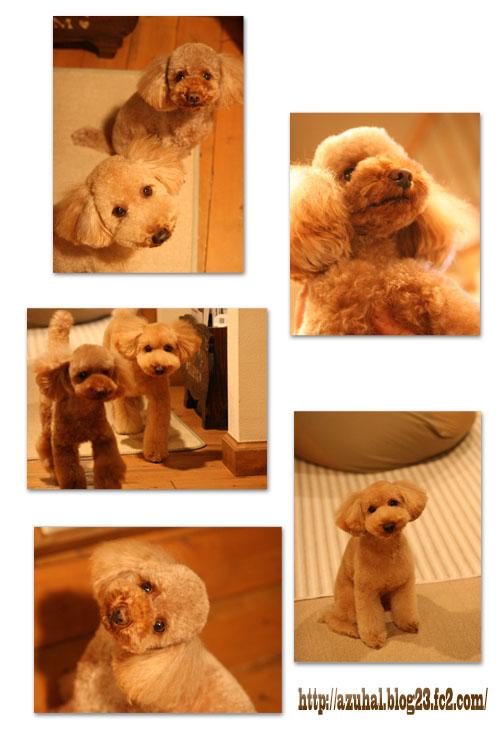 2008-12-29-2.jpg