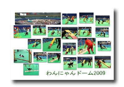 2009-02-015-3.jpg
