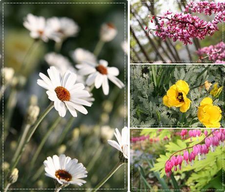 可愛い花たち